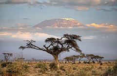Гора Килиманжаро в Африке