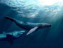 Акула мегалодон 02