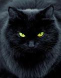 Черный черный кот