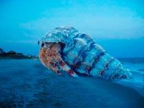 Гиганский молюск
