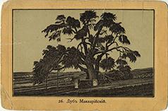 Мамврикийский дуб в конце XIX столетия